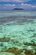 Thailand: Coral off Hat Laem Thong beach, Ko Phi Phi Don, Ko Phi Phi