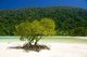 Thailand: Mangroves, Mae Ngam Beach, Ko Surin Nua, Surin Islands Marine National Park